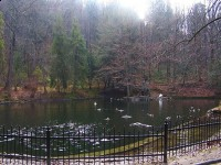 Stawek z łabędziami na Parkowej Górze