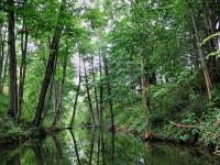 Trasa Leśny Szlak Sapiny