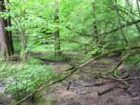 Górznieńsko-Lidzbarski Park Krajobrazowy