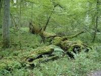 Białowieski Park Narodowy