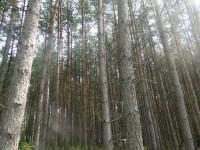 Fragment lasu w Puszczy Piskiej