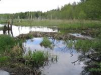 Rezerwat przyrody Piłaki