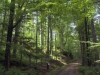 Ścieżka przyrodnicza po ekosystemach leśnych KPN