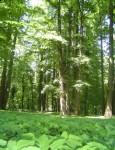 Pomnik Pamięci Sybiraków ziemi sławskiej